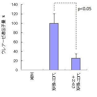 N-アセチルグルコサミンがピロリ菌の増殖を抑制することを確認